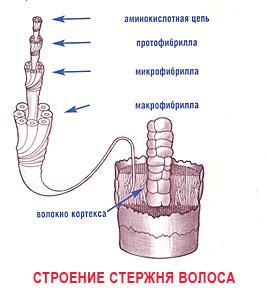 Водородные связи в волосах
